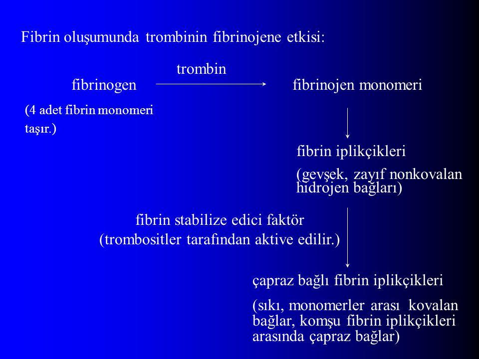 Fibrin oluşumunda trombinin fibrinojene etkisi: fibrinogen (4 adet fibrin monomeri taşır.) fibrinojen monomeri fibrin iplikçikleri (gevşek, zayıf nonkovalan hidrojen bağları) çapraz bağlı fibrin iplikçikleri (sıkı, monomerler arası kovalan bağlar, komşu fibrin iplikçikleri arasında çapraz bağlar) fibrin stabilize edici faktör (trombositler tarafından aktive edilir.) trombin
