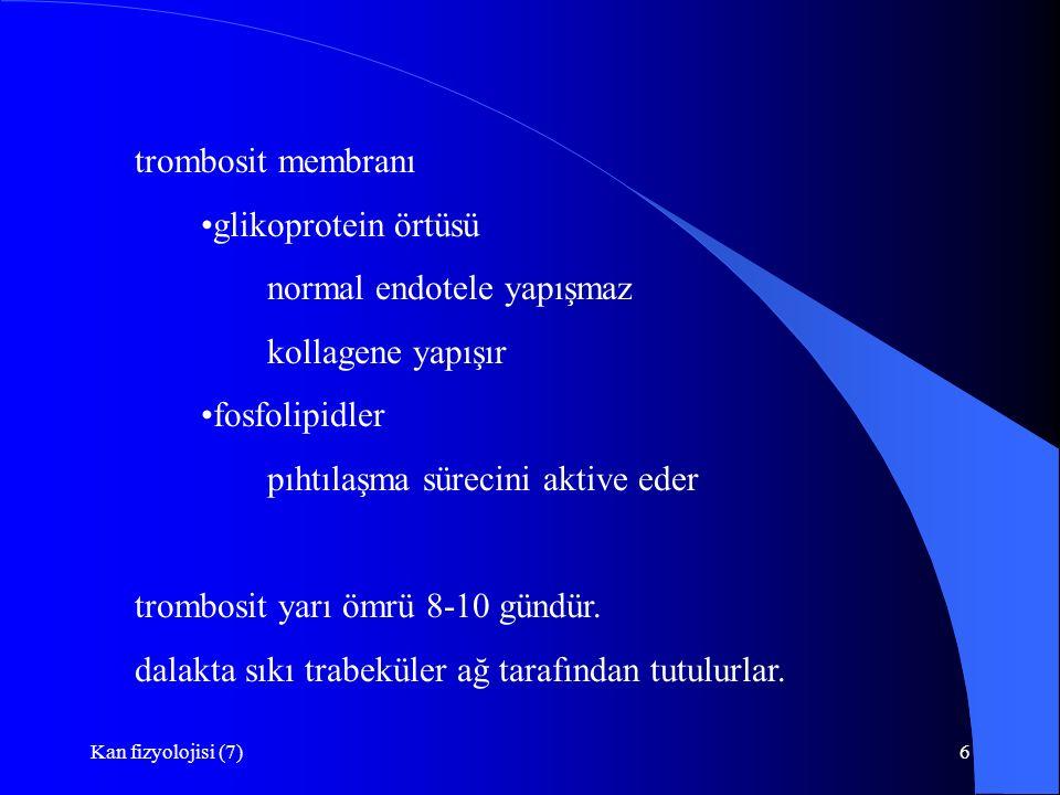 Kan fizyolojisi (7)6 trombosit membranı glikoprotein örtüsü normal endotele yapışmaz kollagene yapışır fosfolipidler pıhtılaşma sürecini aktive eder t