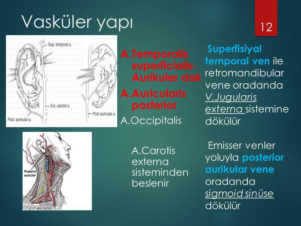 Vasküler yapı A.Temporalis superficialis- Aurikuler dalı A.Auricularis posterior A.Occipitalis A.Carotis externa sisteminden beslenir 12 Superfisiyal temporal ven ile retromandibular vene oradanda V.Jugularis externa sistemine dökülür Emisser venler yoluyla posterior aurikular vene oradanda sigmoid sinüse dökülür