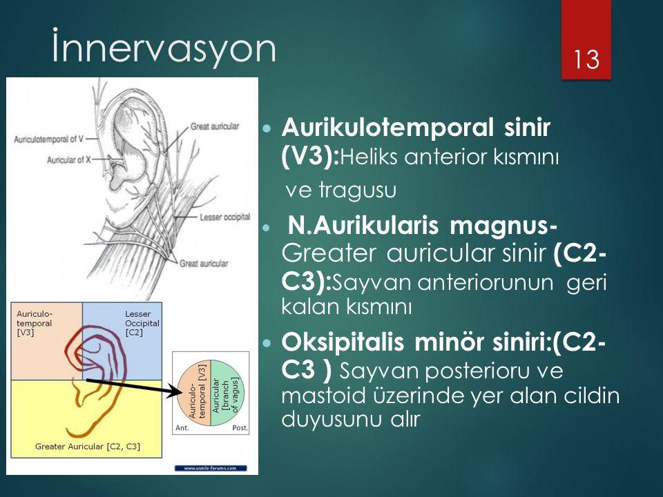 İnnervasyon Aurikulotemporal sinir (V3): Heliks anterior kısmını ve tragusu N.Aurikularis magnus- Greater auricular sinir (C2- C3): Sayvan anteriorunun geri kalan kısmını Oksipitalis minör siniri:(C2- C3 ) Sayvan posterioru ve mastoid üzerinde yer alan cildin duyusunu alır 13