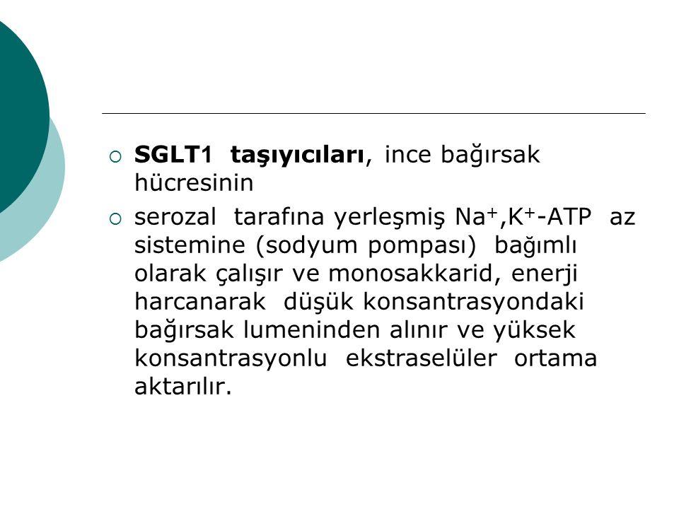  SGLT 1 taşıyıcıları, ince bağırsak hücresinin  serozal tarafına yerleşmiş Na +,K + -ATP az sistemine (sodyum pompası) ba ğı mlı olarak çalışır ve m