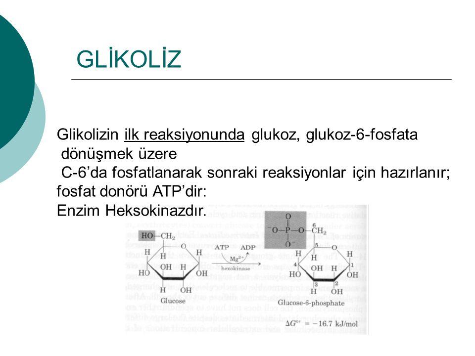 GLİKOLİZ Glikolizin ilk reaksiyonunda glukoz, glukoz-6-fosfata dönüşmek üzere C-6'da fosfatlanarak sonraki reaksiyonlar için hazırlanır; fosfat donörü