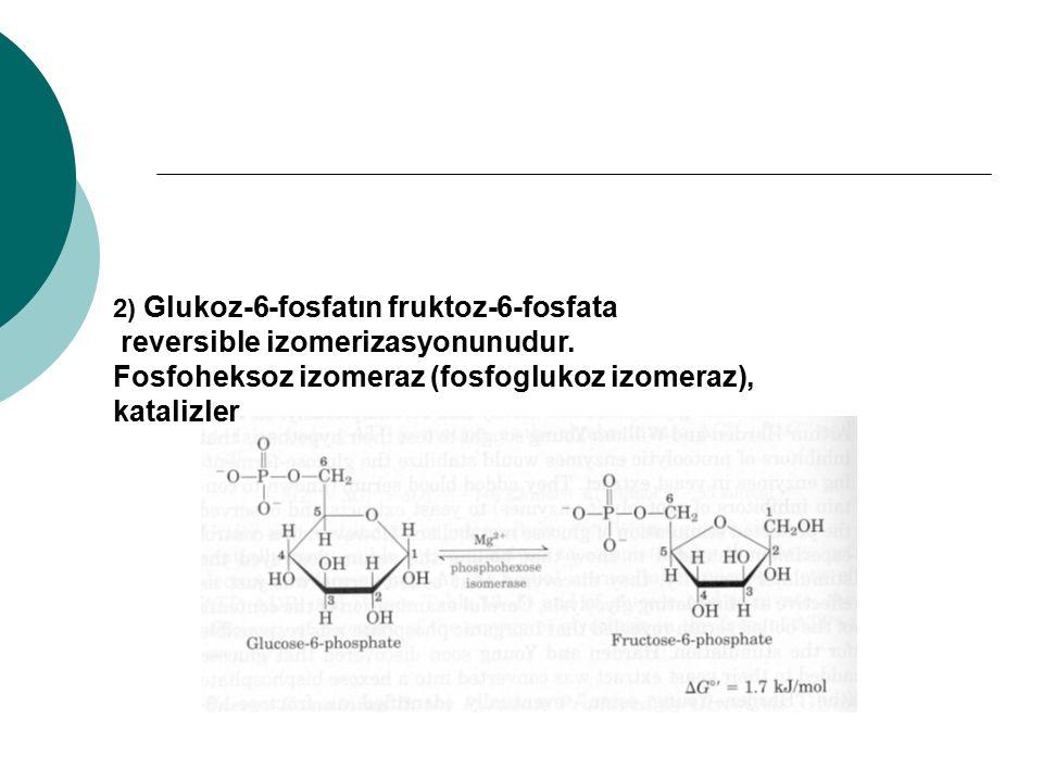 2) Glukoz-6-fosfatın fruktoz-6-fosfata reversible izomerizasyonunudur. Fosfoheksoz izomeraz (fosfoglukoz izomeraz), katalizler