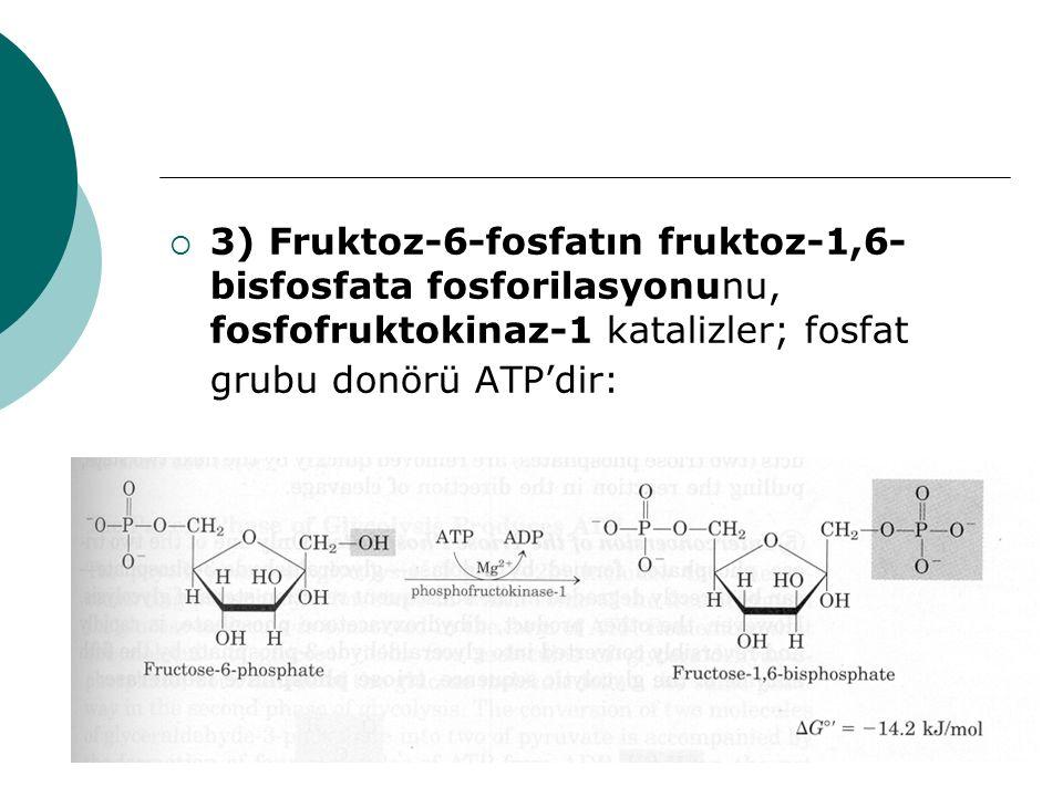  3) Fruktoz-6-fosfatın fruktoz-1,6- bisfosfata fosforilasyonunu, fosfofruktokinaz-1 katalizler; fosfat grubu donörü ATP'dir: