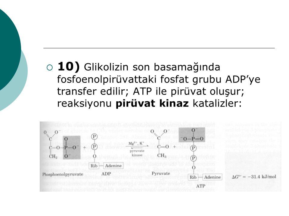  10) Glikolizin son basamağında fosfoenolpirüvattaki fosfat grubu ADP'ye transfer edilir; ATP ile pirüvat oluşur; reaksiyonu pirüvat kinaz katalizler