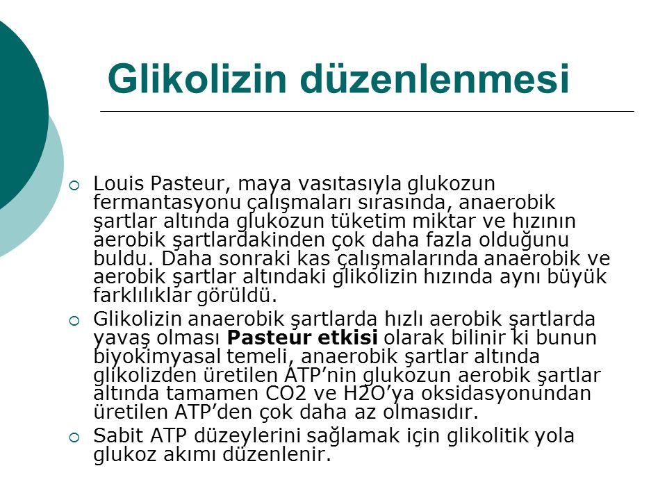 Glikolizin düzenlenmesi  Louis Pasteur, maya vasıtasıyla glukozun fermantasyonu çalışmaları sırasında, anaerobik şartlar altında glukozun tüketim mik