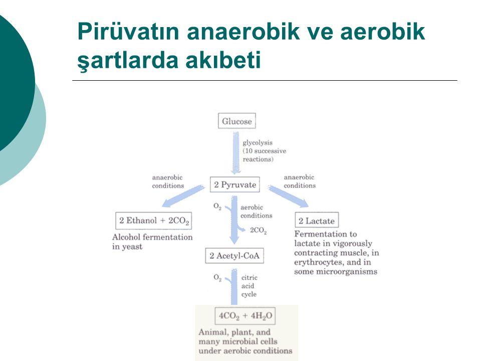Pirüvatın anaerobik ve aerobik şartlarda akıbeti