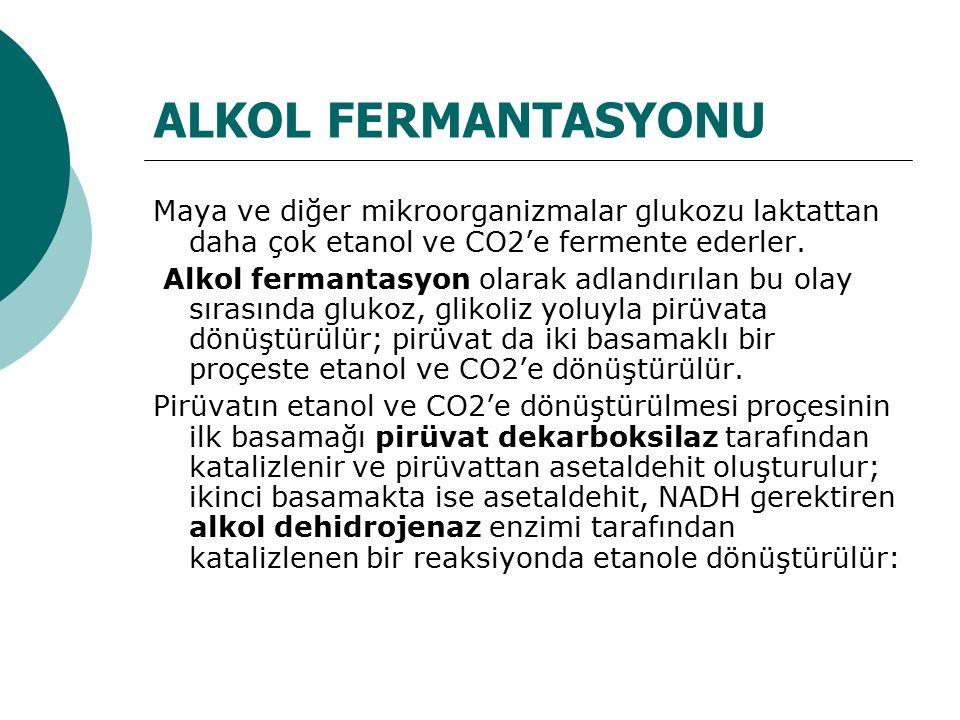 ALKOL FERMANTASYONU Maya ve diğer mikroorganizmalar glukozu laktattan daha çok etanol ve CO2'e fermente ederler. Alkol fermantasyon olarak adlandırıla