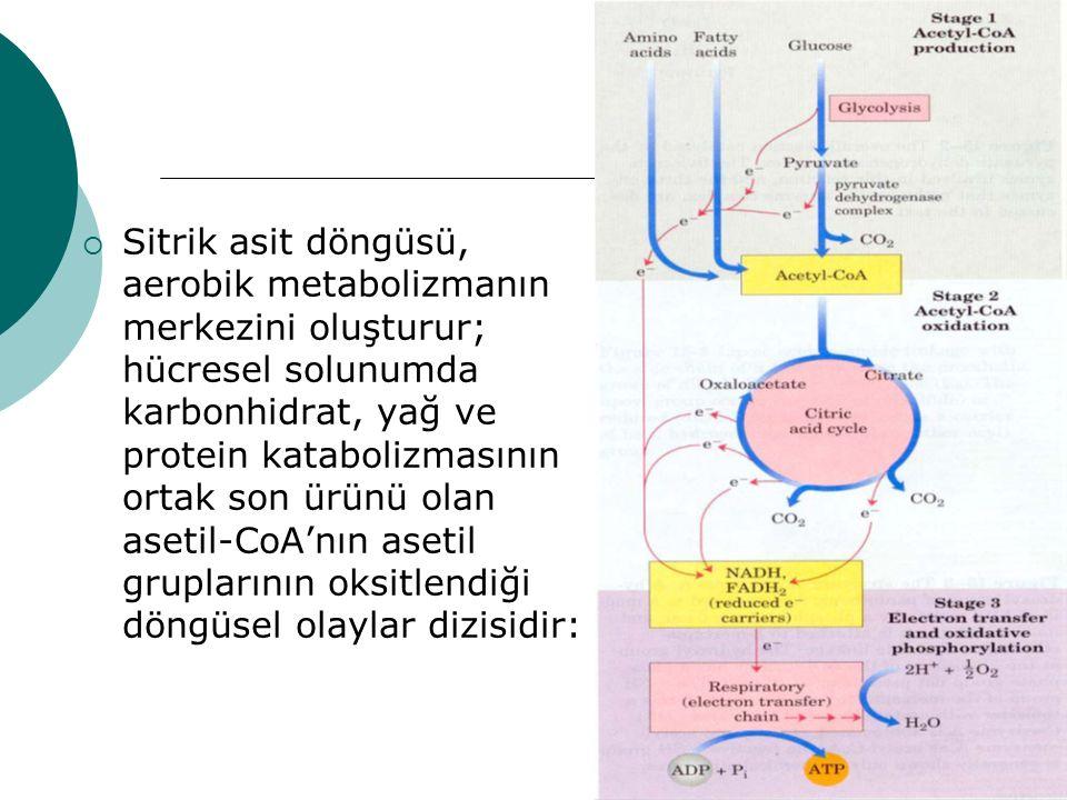  Sitrik asit döngüsü, aerobik metabolizmanın merkezini oluşturur; hücresel solunumda karbonhidrat, yağ ve protein katabolizmasının ortak son ürünü ol