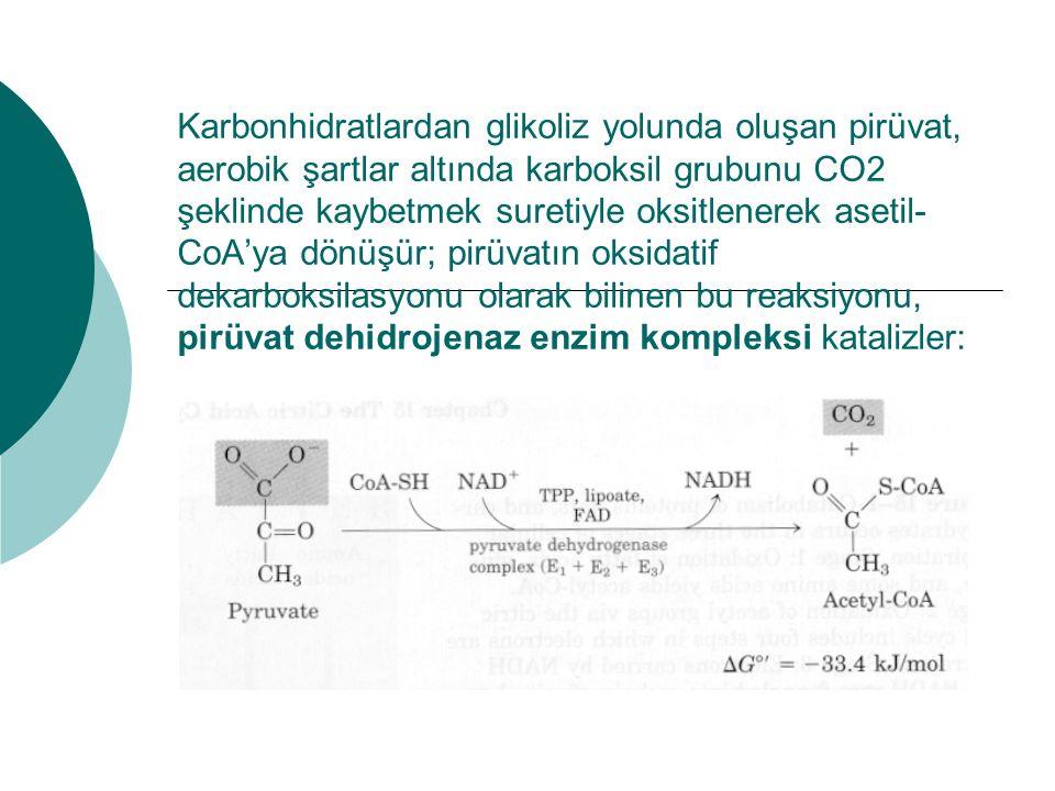 Karbonhidratlardan glikoliz yolunda oluşan pirüvat, aerobik şartlar altında karboksil grubunu CO2 şeklinde kaybetmek suretiyle oksitlenerek asetil- Co