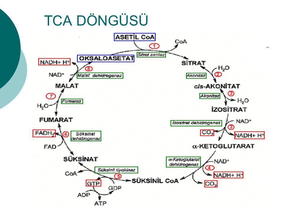 TCA DÖNGÜSÜ