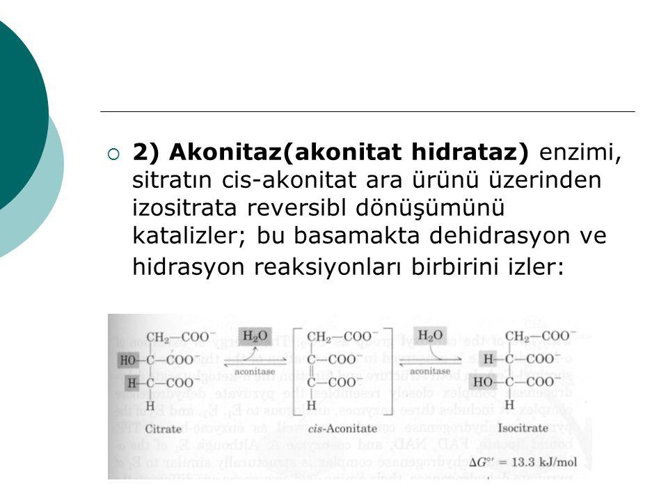  2) Akonitaz(akonitat hidrataz) enzimi, sitratın cis-akonitat ara ürünü üzerinden izositrata reversibl dönüşümünü katalizler; bu basamakta dehidrasyo