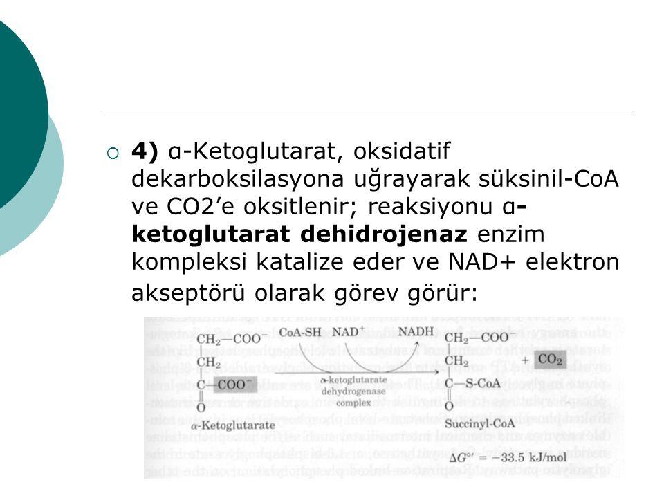  4) α-Ketoglutarat, oksidatif dekarboksilasyona uğrayarak süksinil-CoA ve CO2'e oksitlenir; reaksiyonu α- ketoglutarat dehidrojenaz enzim kompleksi k