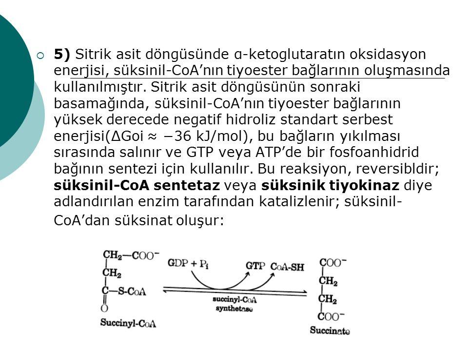  5) Sitrik asit döngüsünde α-ketoglutaratın oksidasyon enerjisi, süksinil-CoA'nın tiyoester bağlarının oluşmasında kullanılmıştır. Sitrik asit döngüs