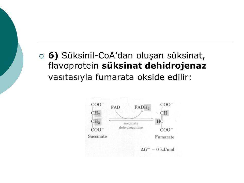  6) Süksinil-CoA'dan oluşan süksinat, flavoprotein süksinat dehidrojenaz vasıtasıyla fumarata okside edilir: