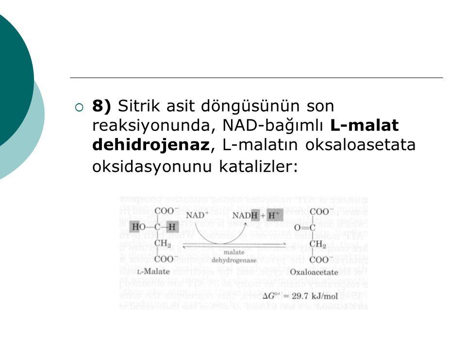  8) Sitrik asit döngüsünün son reaksiyonunda, NAD-bağımlı L-malat dehidrojenaz, L-malatın oksaloasetata oksidasyonunu katalizler: