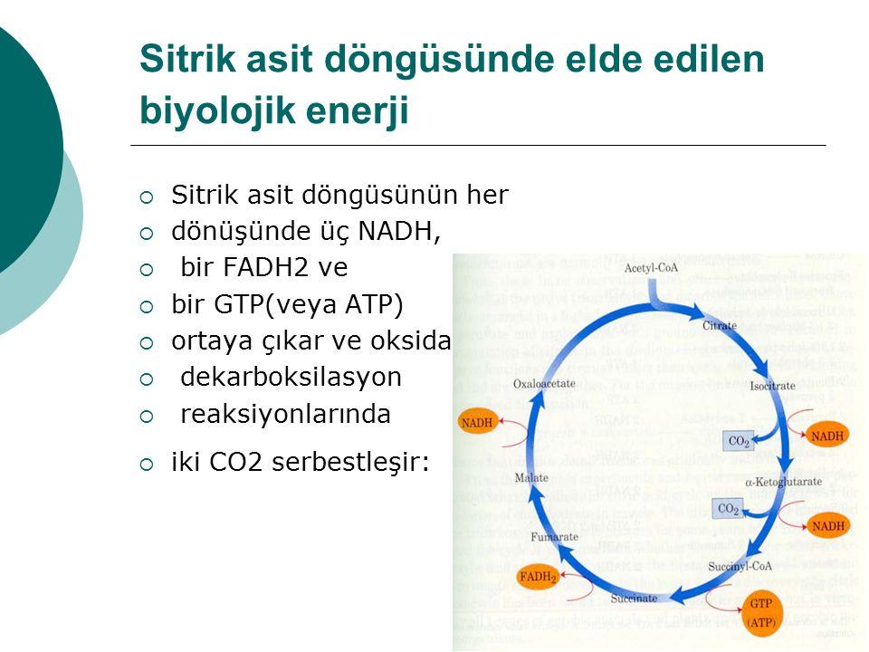 Sitrik asit döngüsünde elde edilen biyolojik enerji  Sitrik asit döngüsünün her  dönüşünde üç NADH,  bir FADH2 ve  bir GTP(veya ATP)  ortaya çıka