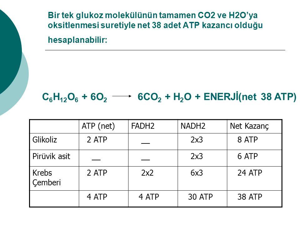 Bir tek glukoz molekülünün tamamen CO2 ve H2O'ya oksitlenmesi suretiyle net 38 adet ATP kazancı olduğu hesaplanabilir: ATP (net)FADH2NADH2Net Kazanç G
