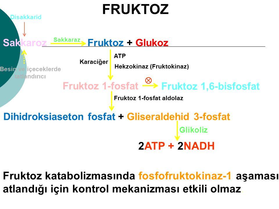 Fruktoz + GlukozSakkaroz Besin ve içeceklerde tatlandırıcı Disakkarid Hekzokinaz (Fruktokinaz) Fruktoz 1-fosfat Karaciğer Dihidroksiaseton fosfat + Gl