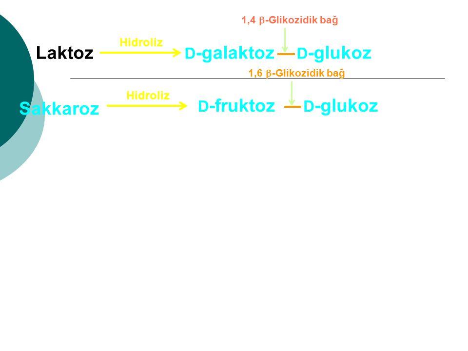 D -galaktoz D -glukoz Laktoz Hidroliz 1,4  -Glikozidik bağ D -fruktoz D -glukoz Hidroliz 1,6  -Glikozidik bağ Sakkaroz