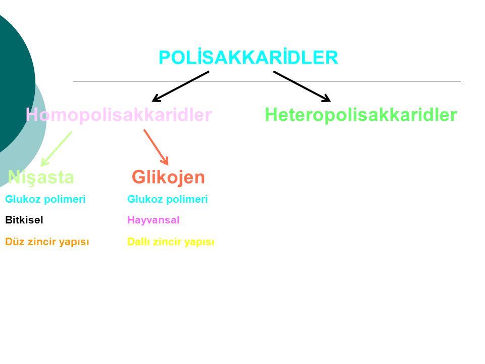 POLİSAKKARİDLER HomopolisakkaridlerHeteropolisakkaridler NişastaGlikojen HayvansalBitkisel Glukoz polimeri Düz zincir yapısıDallı zincir yapısı