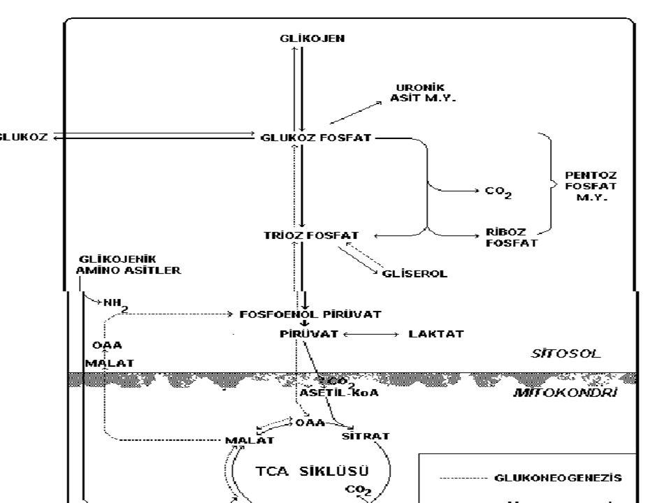 Sitrik asit döngüsü, trikarboksilik asit döngüsü (TCA döngüsü), Krebs döngüsü  Krebs devri karbonhidratlar, yağlar ve proteinlerin solunumla parçalanması olayında ortak karbon yoludur.