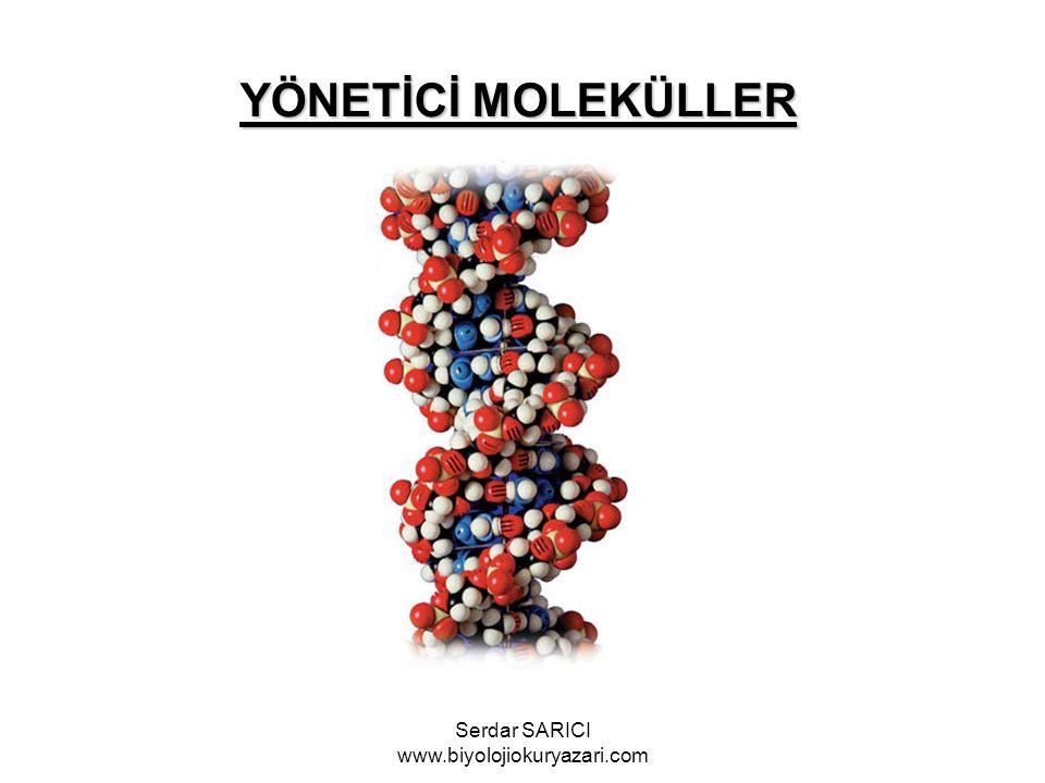YÖNETİCİ MOLEKÜLLER Serdar SARICI www.biyolojiokuryazari.com