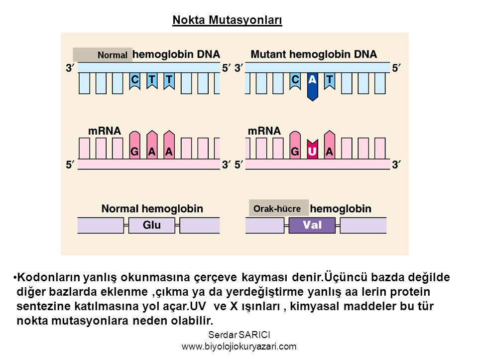 Nokta Mutasyonları Kodonların yanlış okunmasına çerçeve kayması denir.Üçüncü bazda değilde diğer bazlarda eklenme,çıkma ya da yerdeğiştirme yanlış aa
