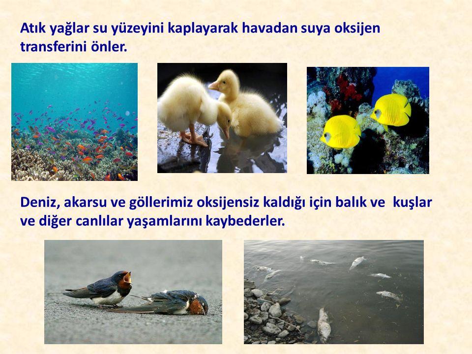 Atık yağlar su yüzeyini kaplayarak havadan suya oksijen transferini önler. Deniz, akarsu ve göllerimiz oksijensiz kaldığı için balık ve kuşlar ve diğe