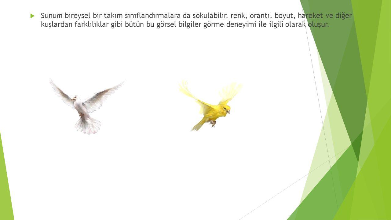  Sunum bireysel bir takım sınıflandırmalara da sokulabilir. renk, orantı, boyut, hareket ve diğer kuşlardan farklılıklar gibi bütün bu görsel bilgile