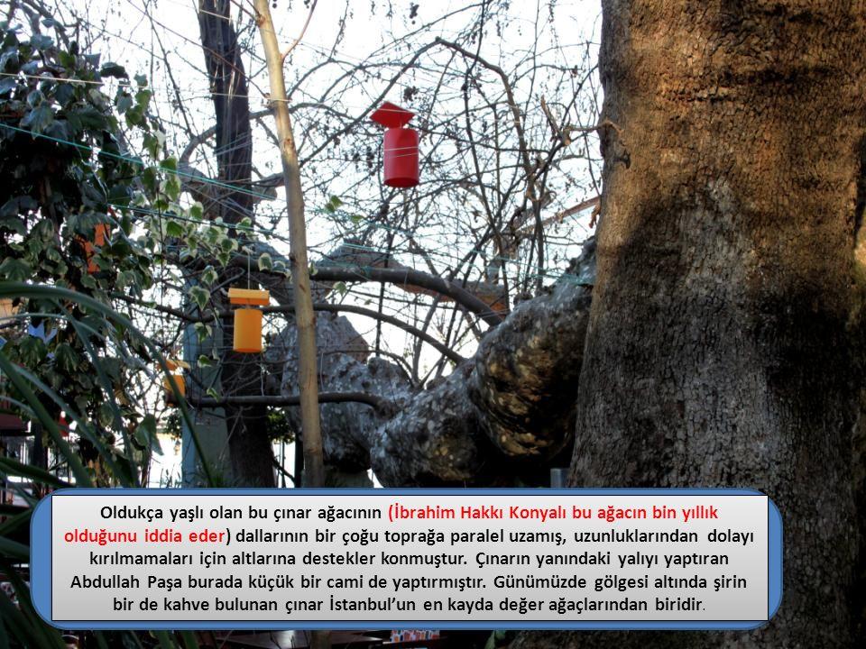 Oldukça yaşlı olan bu çınar ağacının (İbrahim Hakkı Konyalı bu ağacın bin yıllık olduğunu iddia eder) dallarının bir çoğu toprağa paralel uzamış, uzun