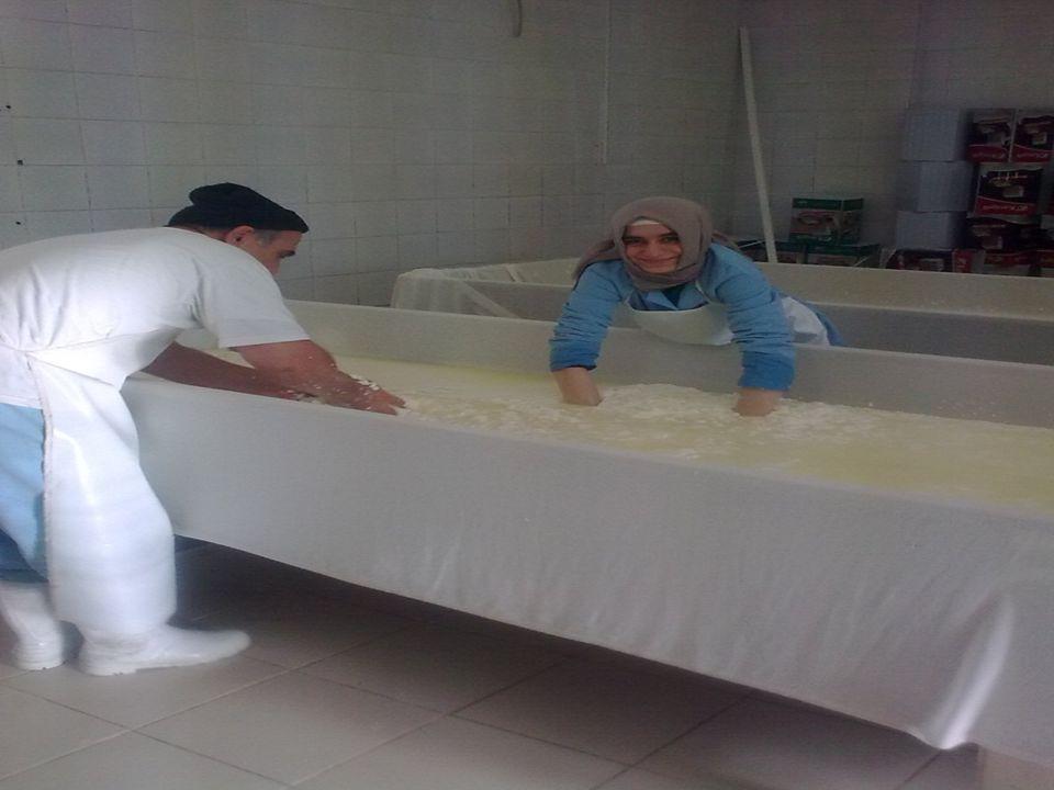Pıhtı işleme, peynir suyunun ayrılması ve presleme işlemleri yaklaşık 4-6 saat sürer.