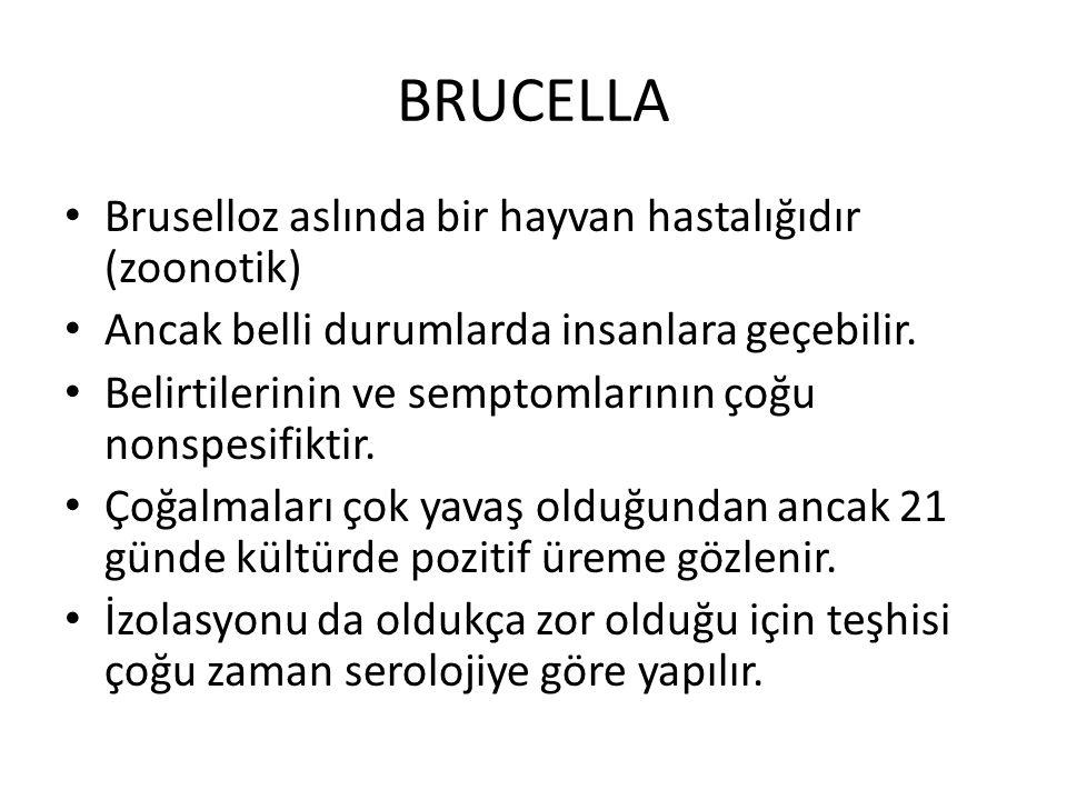 Bruselloz aslında bir hayvan hastalığıdır (zoonotik) Ancak belli durumlarda insanlara geçebilir.