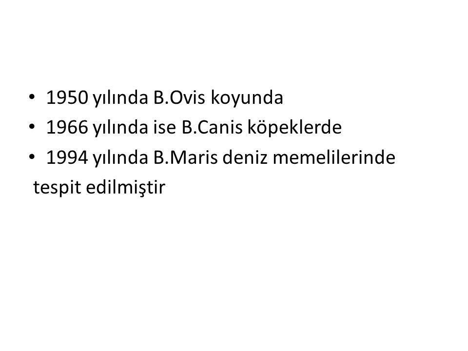 1950 yılında B.Ovis koyunda 1966 yılında ise B.Canis köpeklerde 1994 yılında B.Maris deniz memelilerinde tespit edilmiştir