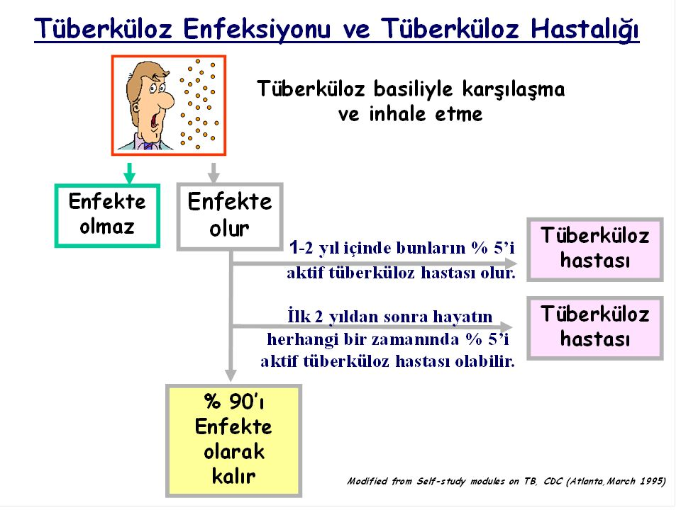 Tedavi olmayan bir tüberküloz hastası her yıl yaklaşık 10-15 kişiyi enfekte eder.