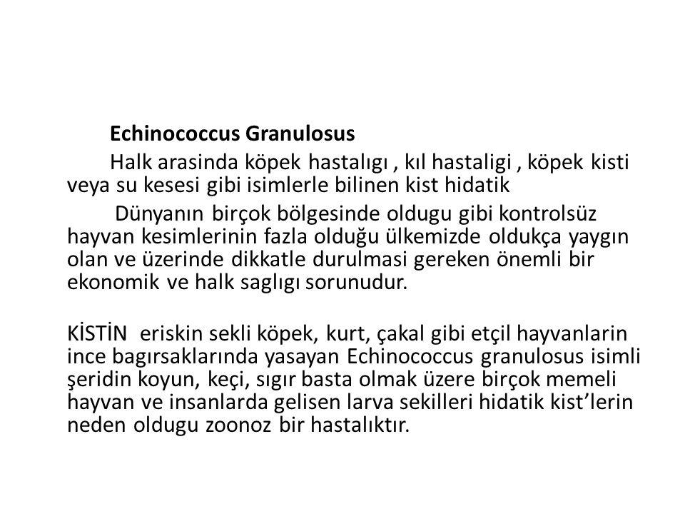 Echinococcus Granulosus Halk arasinda köpek hastalıgı, kıl hastaligi, köpek kisti veya su kesesi gibi isimlerle bilinen kist hidatik Dünyanın birçok b