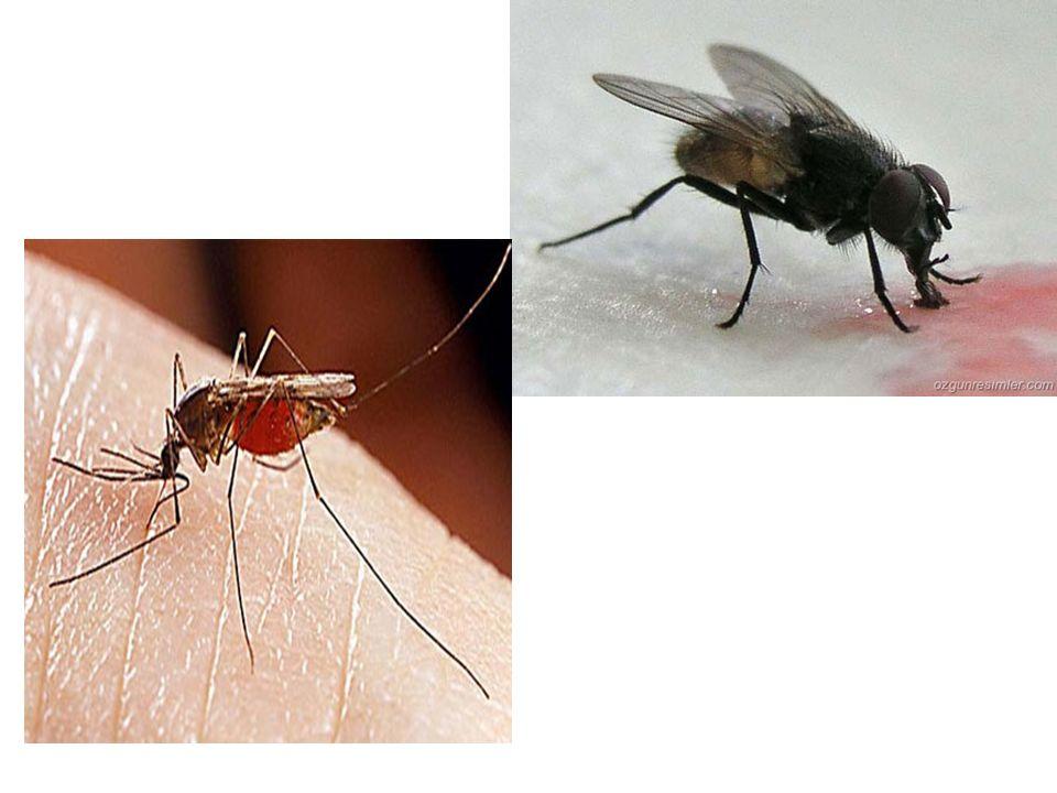 PARAZİTLERİN KAYNAKLARI 1-CANLI KAYNAKLAR İnsan ve Hayvanlar (Hasta veya Taşıyıcı) NASIL BULAŞIRLAR İdrar, Balgam,Genital organ salgıları,Deri lezyonları ve kan