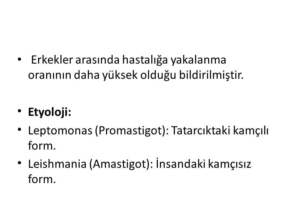 Erkekler arasında hastalığa yakalanma oranının daha yüksek olduğu bildirilmiştir. Etyoloji: Leptomonas (Promastigot): Tatarcıktaki kamçılı form. Leish