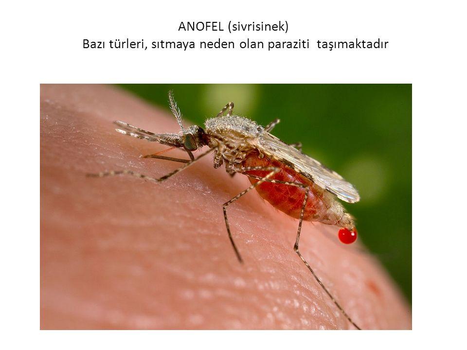 İnsan vücuduna dişi anofel cinsi sivrisinekler yolu ile bulaştırılan bir hastalıktır.