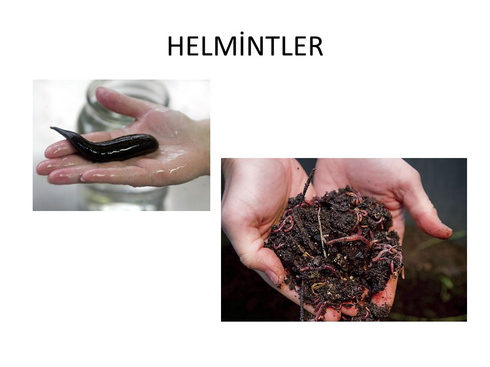 HELMİNTLER