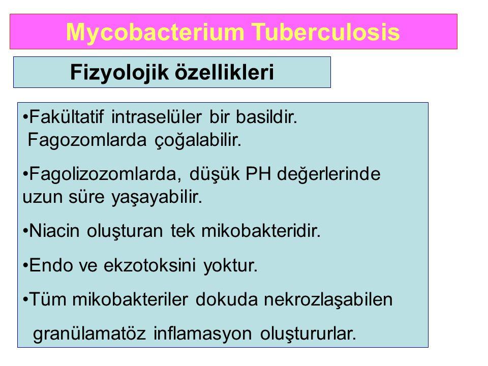 Mycobacterium Tuberculosis Fizyolojik özellikleri Fakültatif intraselüler bir basildir. Fagozomlarda çoğalabilir. Fagolizozomlarda, düşük PH değerleri