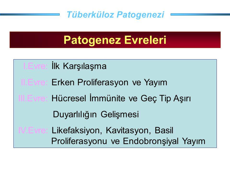 Tüberküloz Patogenezi Patogenez Evreleri I.Evre: İlk Karşılaşma II.Evre: Erken Proliferasyon ve Yayım III.Evre: Hücresel İmmünite ve Geç Tip Aşırı Duy