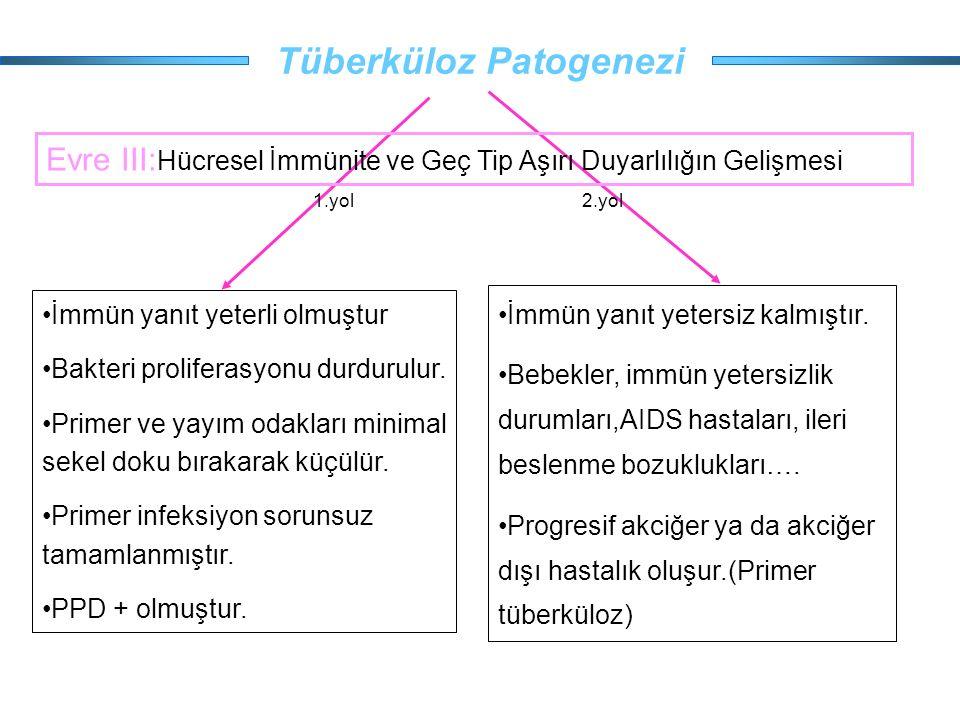 Tüberküloz Patogenezi İmmün yanıt yeterli olmuştur Bakteri proliferasyonu durdurulur. Primer ve yayım odakları minimal sekel doku bırakarak küçülür. P