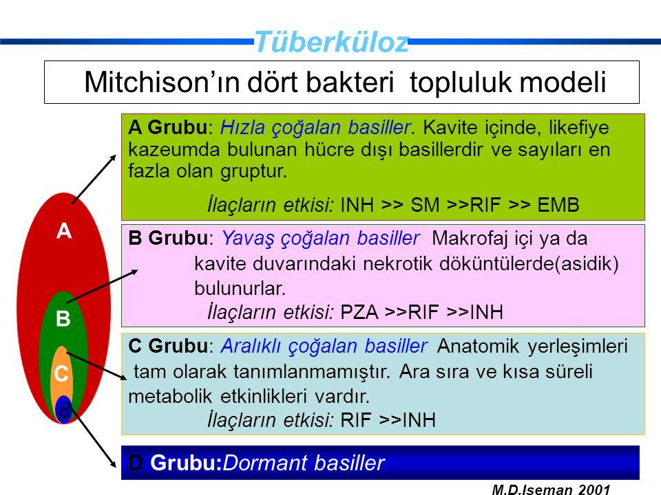 Tüberküloz Mitchison'ın dört bakteri topluluk modeli B C D A Grubu: Hızla çoğalan basiller. Kavite içinde, likefiye kazeumda bulunan hücre dışı basill