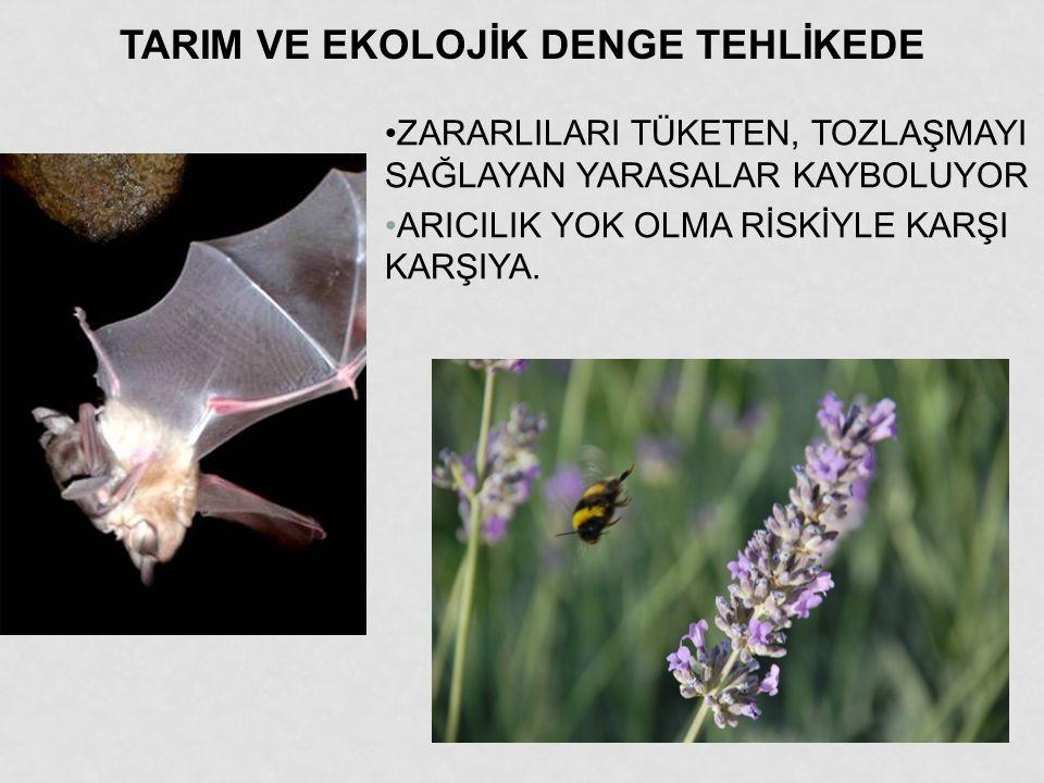 KARABURUN YURTTAŞ DAVALARI KENT MECLİSİ 5.