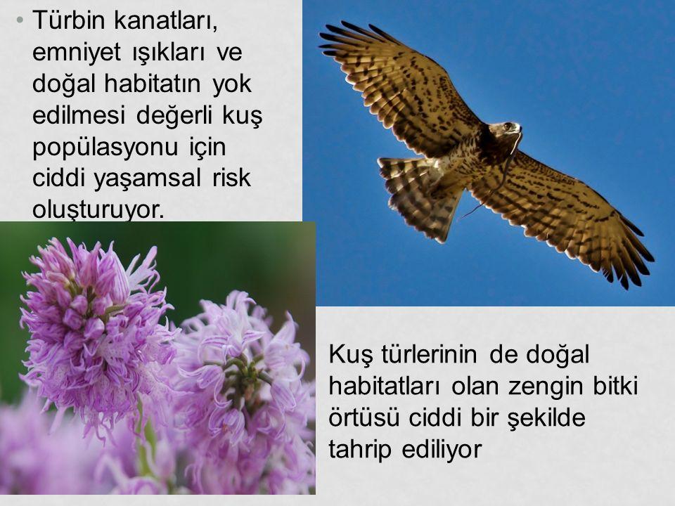 Türbin kanatları, emniyet ışıkları ve doğal habitatın yok edilmesi değerli kuş popülasyonu için ciddi yaşamsal risk oluşturuyor. Kuş türlerinin de doğ