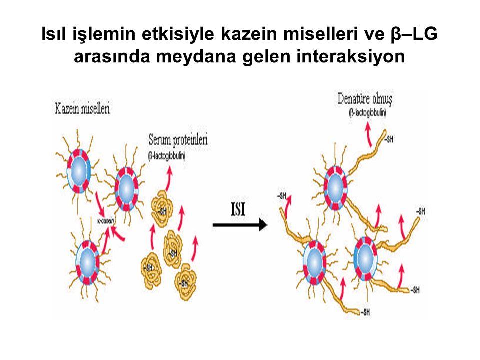 Isıl işlemin etkisiyle kazein miselleri ve β–LG arasında meydana gelen interaksiyon