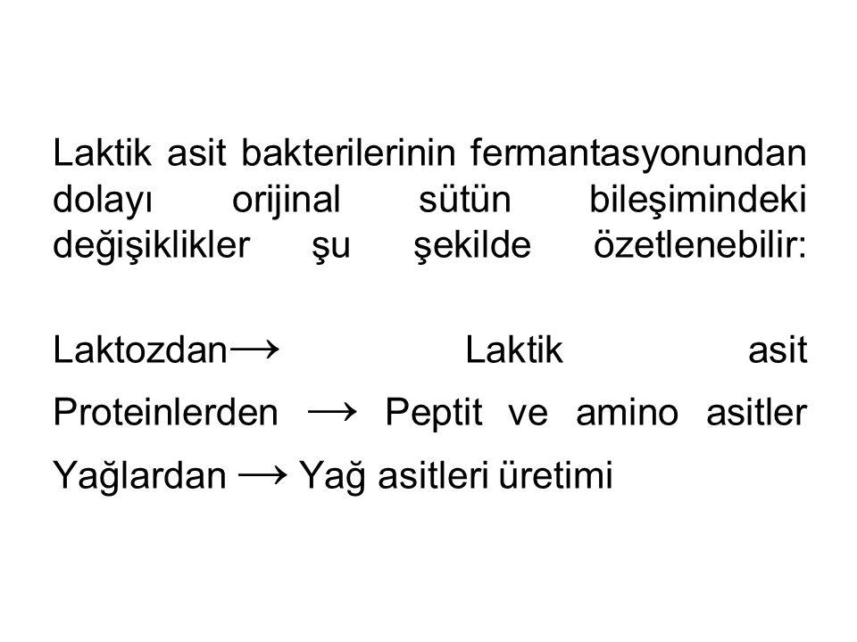 Laktik asit bakterilerinin fermantasyonundan dolayı orijinal sütün bileşimindeki değişiklikler şu şekilde özetlenebilir: Laktozdan → Laktik asit Prote