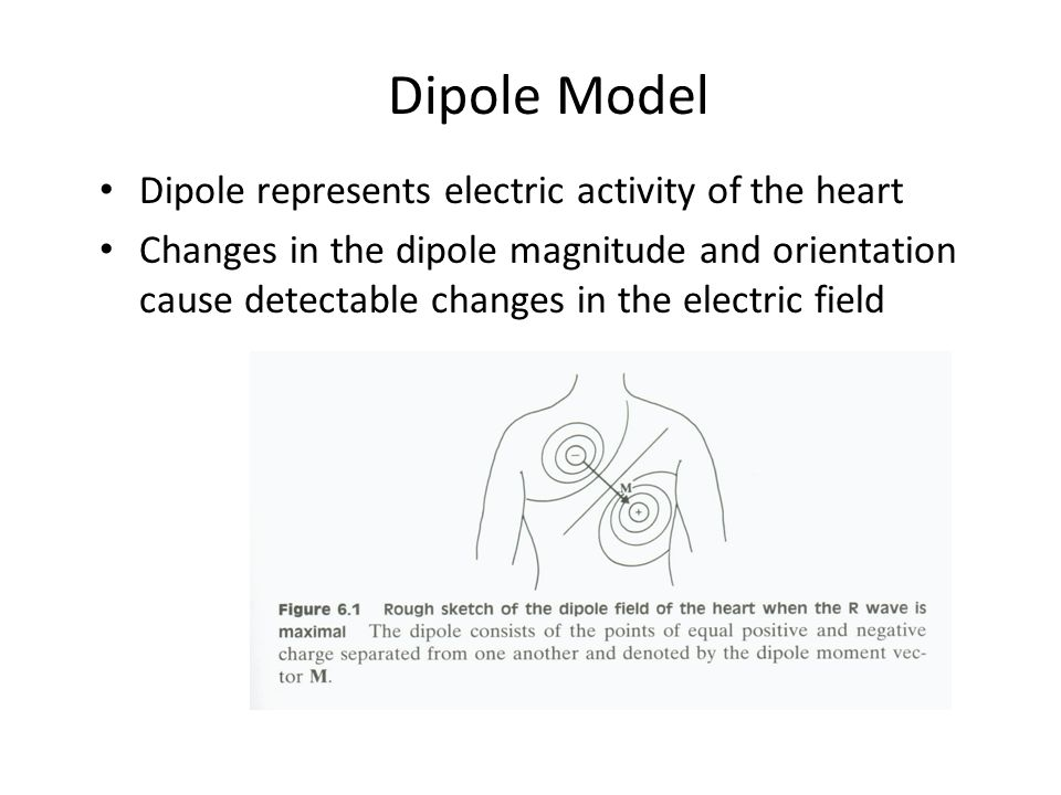 Dipole Model Dipole represents electric activity of the heart Changes in the dipole magnitude and orientation cause detectable changes in the electric