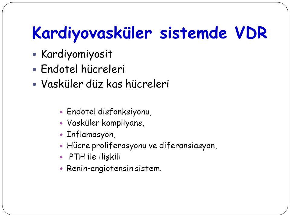 Kardiyovasküler sistemde VDR Kardiyomiyosit Endotel hücreleri Vasküler düz kas hücreleri Endotel disfonksiyonu, Vasküler kompliyans, İnflamasyon, Hücr